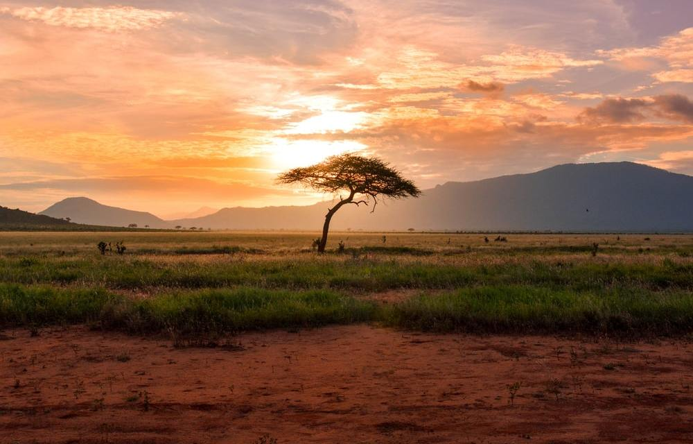 EAST AFRICA: Historical Land Injustices in Kenya: A Case for The Mariwenyi People, Taita Taveta County By Clinton Nyamongo