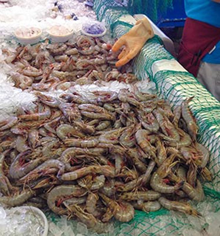 Fresh York New Fish