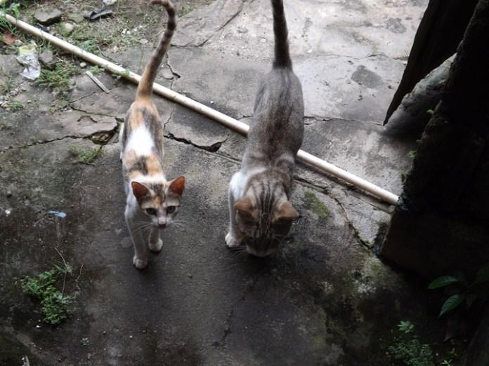 Anton cats