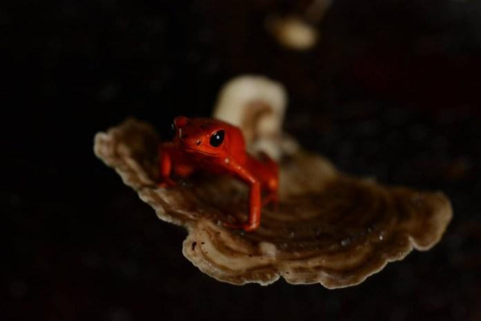 LH fungus frog
