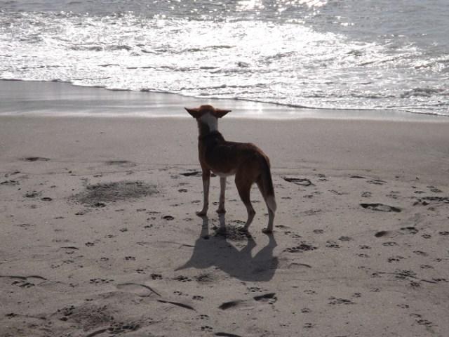 fishdog 1