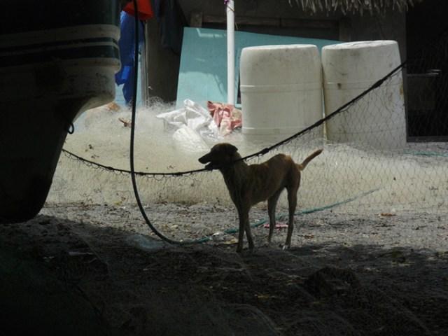 fishdog 4