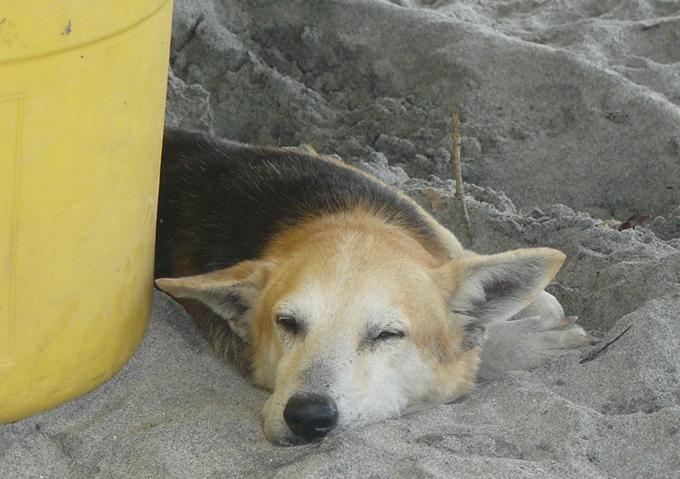 fishdog 7