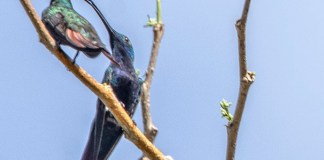 sort of a hummingbird
