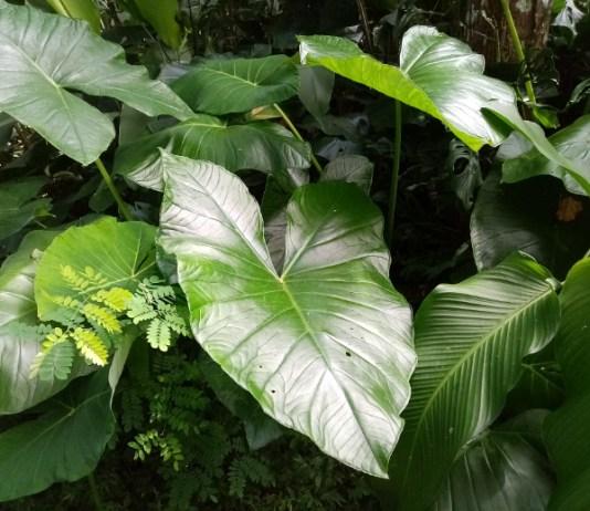 otoe greens