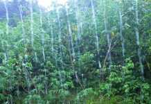 rain in Cocle