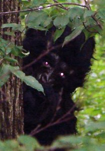 Is that General Ursus peaking at me?