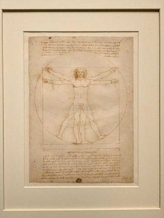 l'homme de Vitruve - Léonard de Vinci