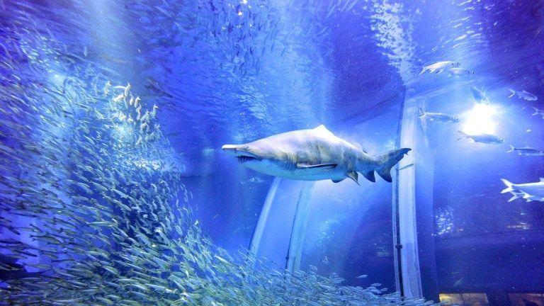 paris aquarium cineaqua