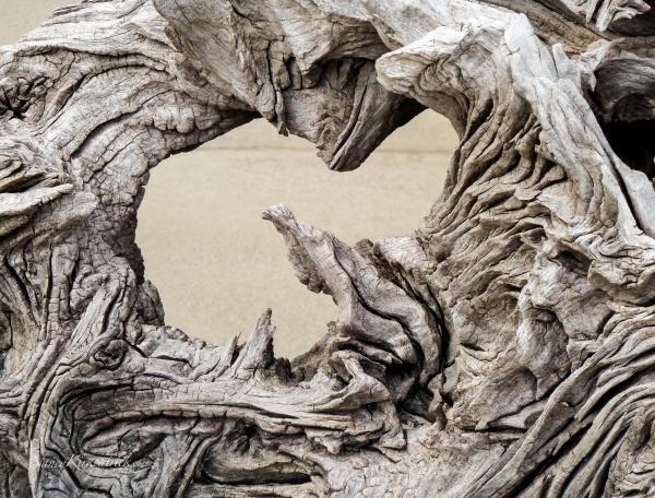 Driftwood-1010357