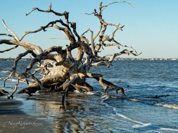 Driftwood Beach w LH