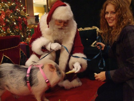 Rachel Woodhouse, Cupcake, and Santa