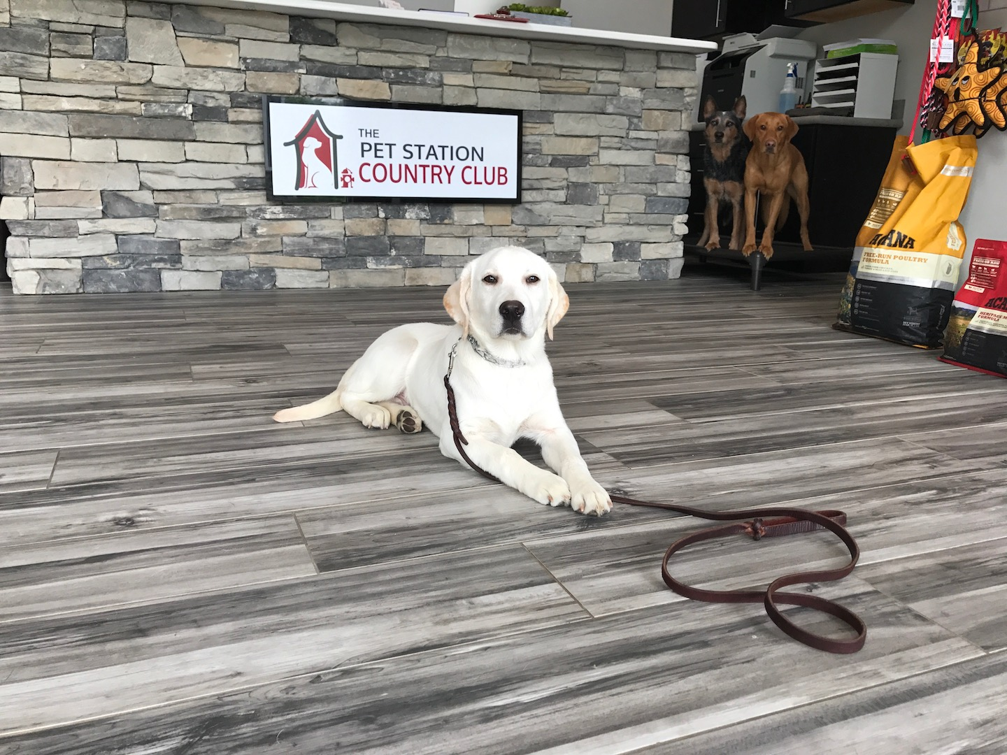 Dog Training At The Pet Station Country Club