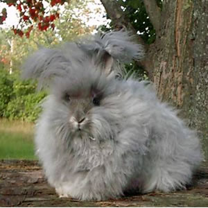 Rabbit Breeds And Types Pet Warehouse
