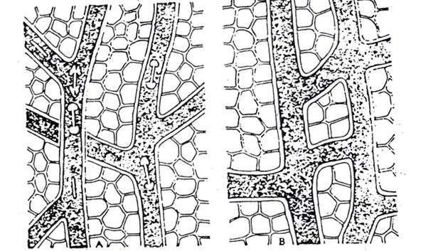 Plant Secretory Tissue