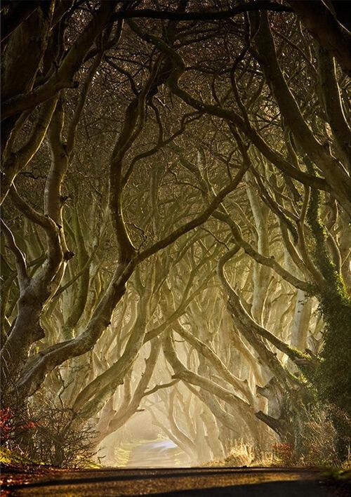 Tree Photography