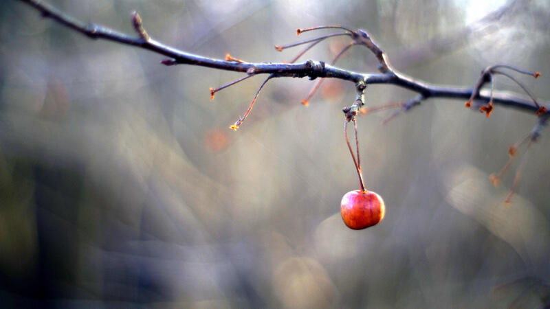 bokeh apple