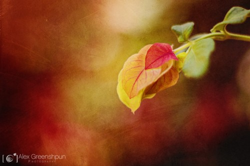 colors-of-autumn-1-900