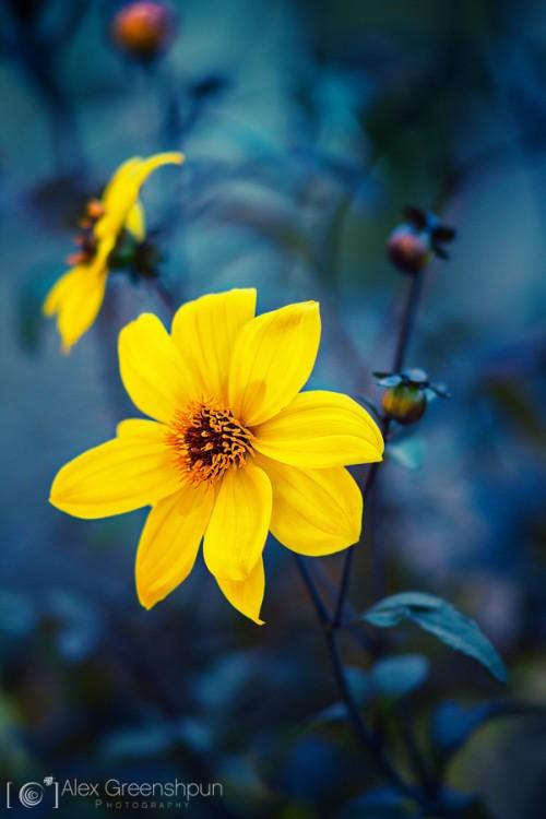 yellow-flower-einkarem-1-900