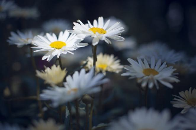 Aurimas - Flowers