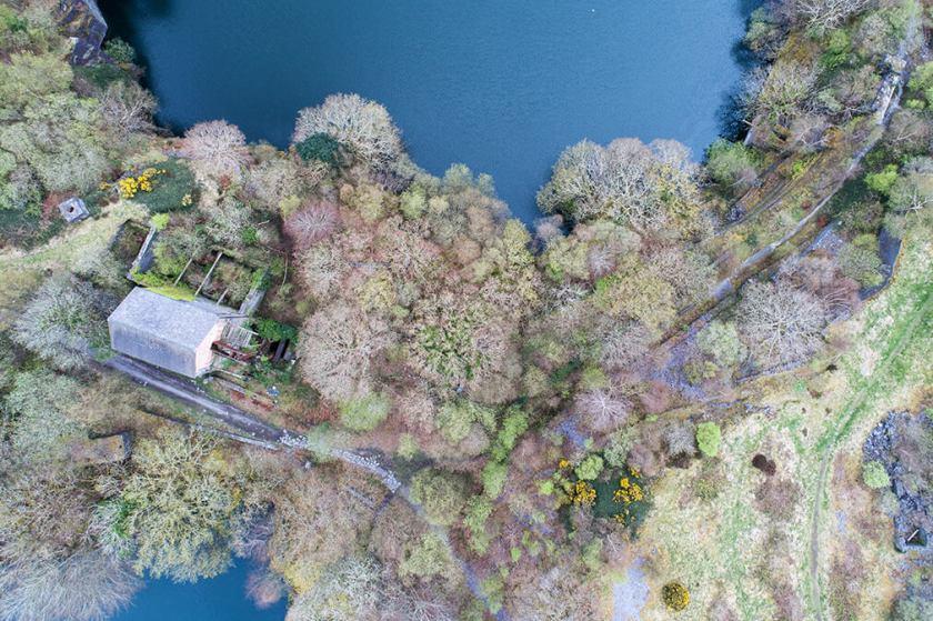 Lente Bomen Dorethea steengroeve