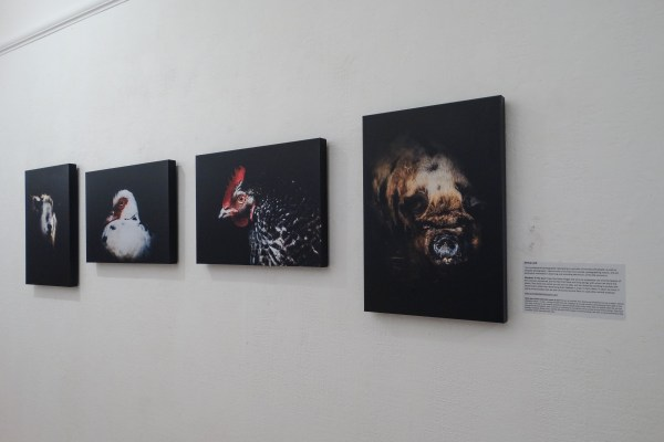 Photography animals vegan exhibition