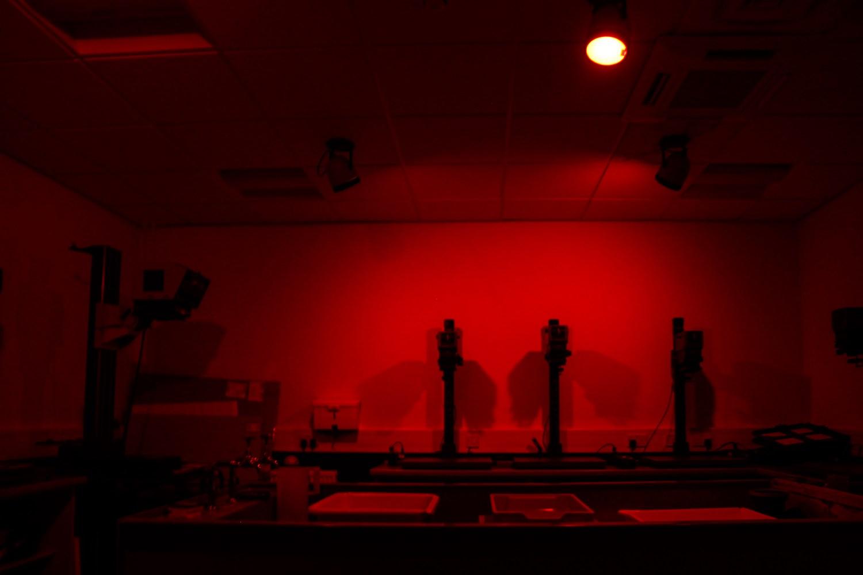 dark room red light developing photographs