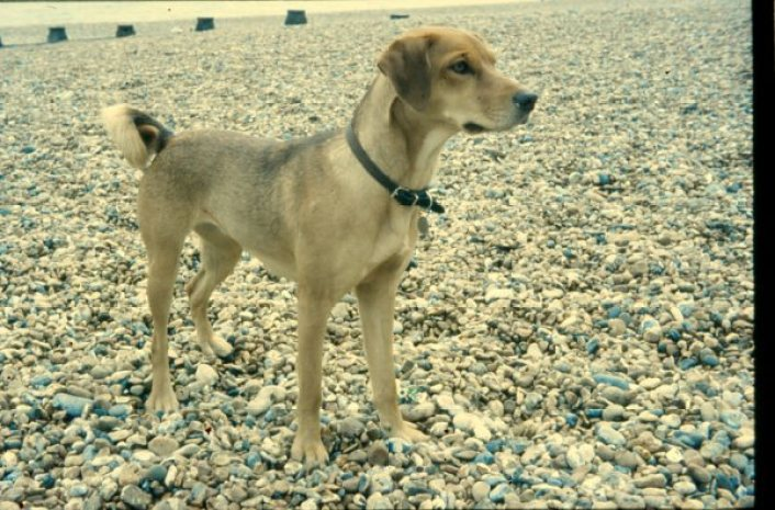 dog pet film photography