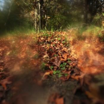 Carpet of leaves, autumn, leaves
