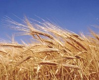 agriculture-covers-one 3rd-of-all-land.jpg