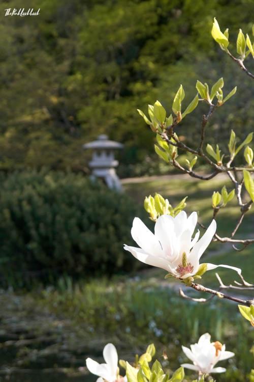 Setagaya Park Sculpture View Magnolia