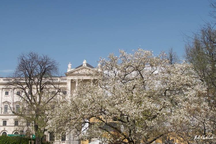 Vienna Spring Burggarten Nationalbibliothek