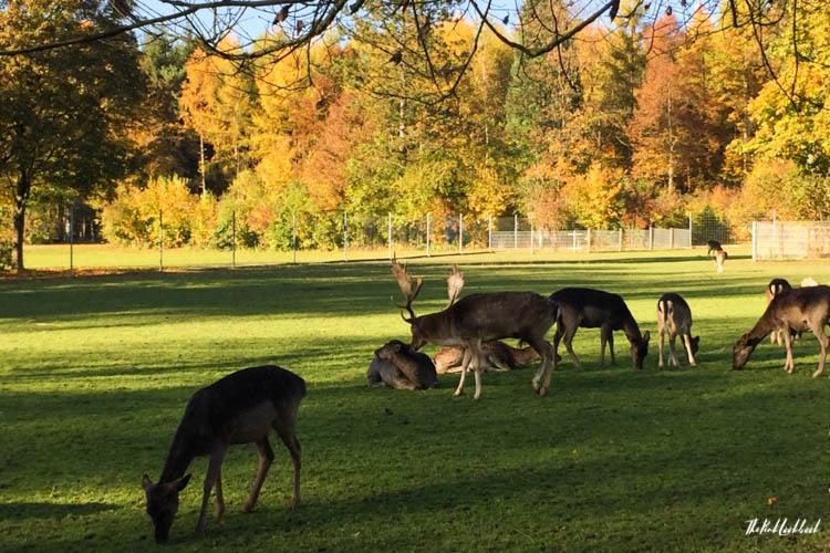 Winterthur Switzerland Day Trip from Zurich Wildpark Bruderhaus