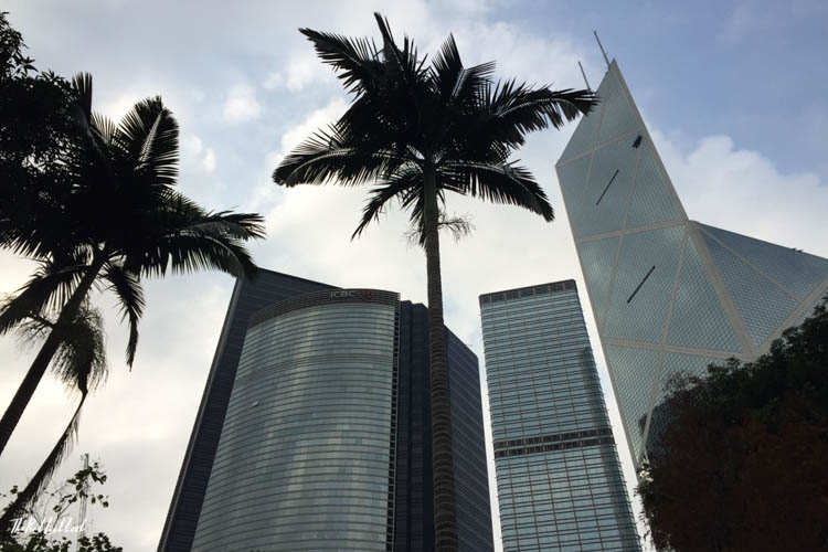 Hong Kong Ultimate Guide All You Need to Know for Your Trip to Fragrant Harbour View Palm Tree