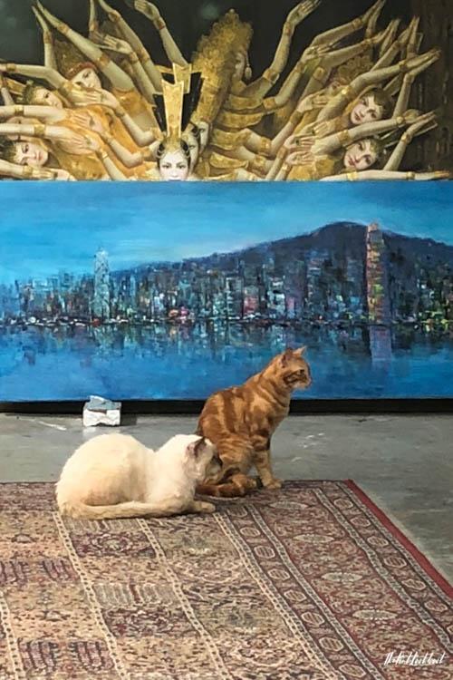 Hong Kongs Seaside Escapes Stanley Village Gallery Kitties