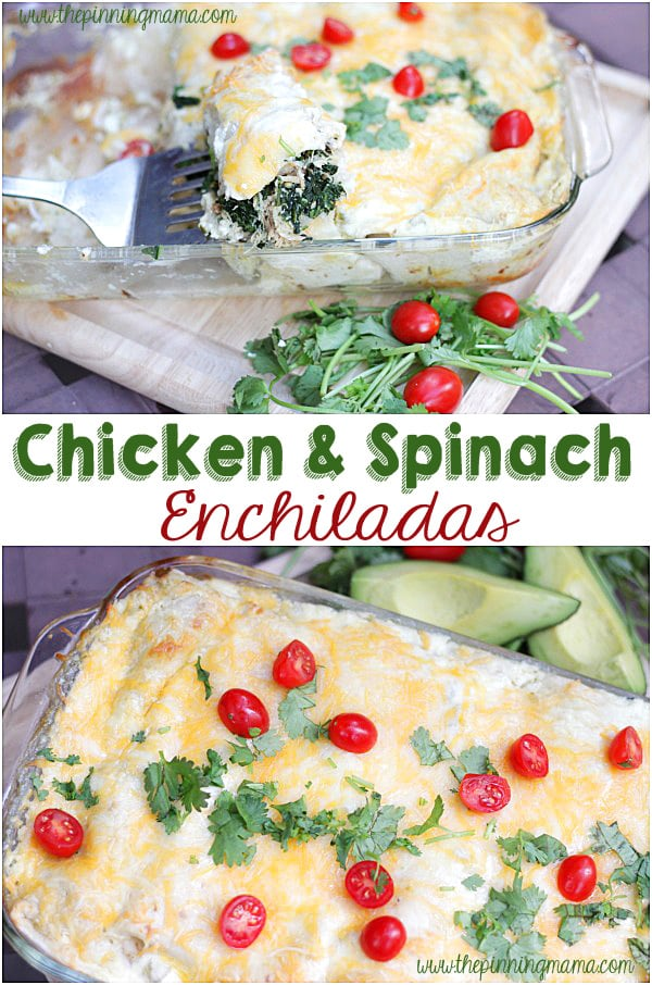 I love adding super foods to everyday recipes to kick the nutrients in the recipe up a notch! Chicken & Spinach Enchilada recipe made w crock pot chicken!