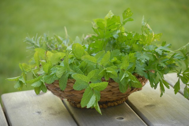 Harvesting Herbs- Leanr how to harvest, dry, and store your own homegrown herbs!