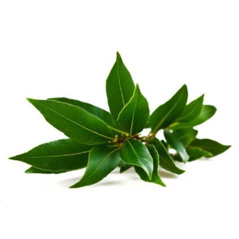 Camphor Leaf Uses | Jidileaf co