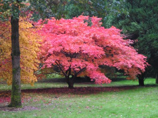Autumn Colours. The picture shows red and orange trees.