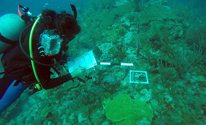 Monitoring the Second Largest Reef in the World