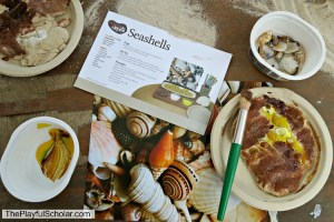 Shells – A Day with Mother Goose Time