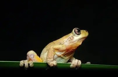 Leaping from Frogs to Morality
