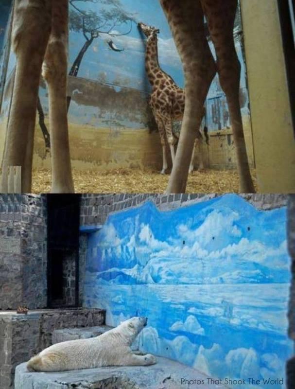 girafă și urs polar în captivitate