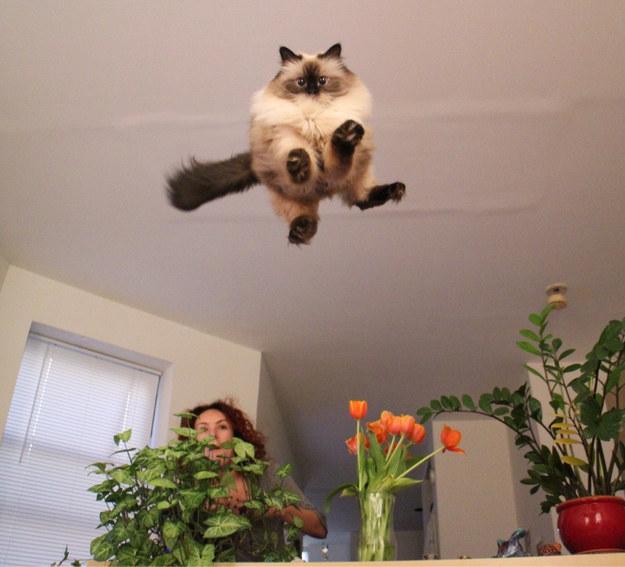 fotografie-amuzanta-cu-pisica