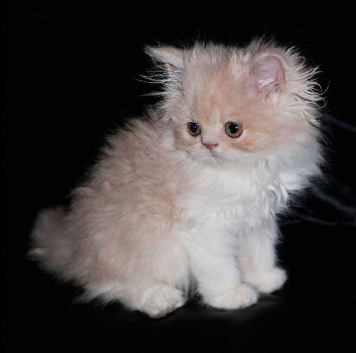 fotografie-pisica-frumoasa