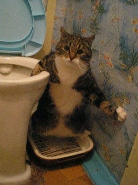 fotografii-pisici