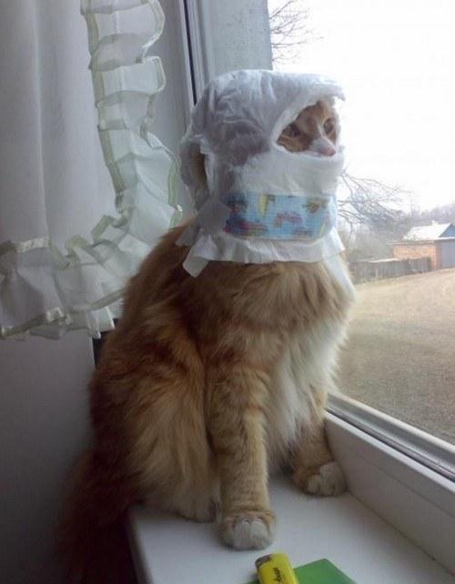 pisic-foto-buna