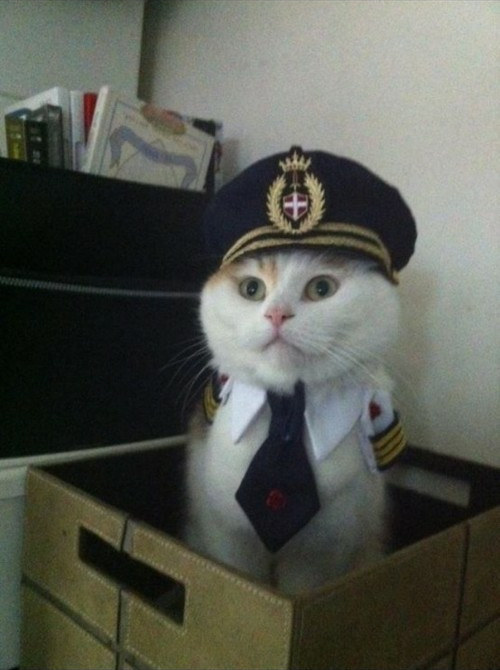 pisica-imbracata