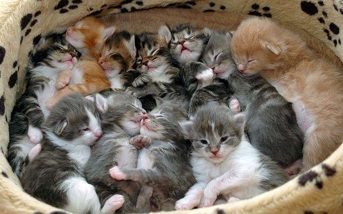 poze-cu-multe-pisici