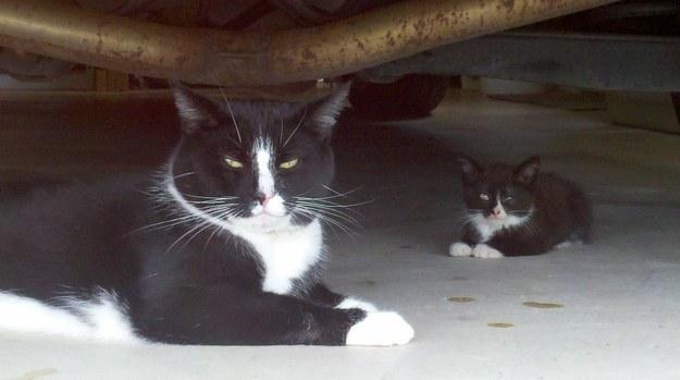 poze-pisici
